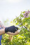 Cropped image of gardener pruning branches at plant nursery Royalty Free Stock Photo