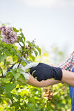 Cropped image of gardener pruning branches at plant nursery Royalty Free Stock Photography