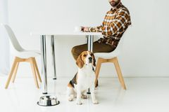 cropped image of man drinking coffee, dog sitting on floor royalty free stock photo