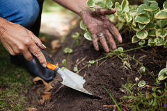 Cropped image of senior woman digging soil with trowel. At backyard royalty free stock photos