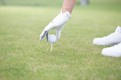 Cropped image of woman placing ball on golf tee Royalty Free Stock Image