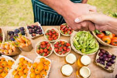Cropped image of woman shaking hand with man selling fruits royalty free stock photo
