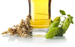 Cropped mug of beer on table with hop cones, ears of wheat  on white Royalty Free Stock Image