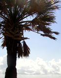 Cropped Palm. High contrast shot of a palm tree against bright skies. Plenty of white space for copy Stock Images