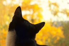 Cat looking at the sky. Cropped shot of a black cat. cat looking to the side. Cat Close-up, yellow blurred background. Cat looking up. Cat looking at the sky Royalty Free Stock Images