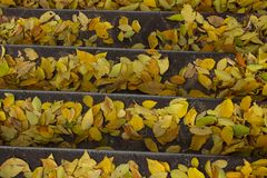 Cropped Shot Of Colorful Leaves. Nature, Parks, Outdoor Concept. royalty free stock photos