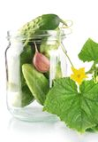 Cropped shot of cucumbers in jar preparate for canning isolated on white Royalty Free Stock Images