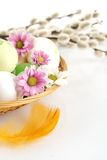 Cropped shot easter eggs in basket with flowers and catkins Royalty Free Stock Images