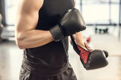 Cropped shot of muscular sportsman wearing boxing gloves in gym Stock Photography