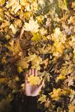 Woman holding fallen leaf Stock Photography
