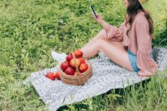 Cropped shot of woman with smartphone resting on blanket with wicker basket full of apples. In park stock image