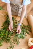 Cropped shot of young florist in apron arranging green plants. In flower shop royalty free stock images