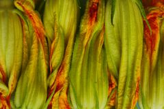 Cropped shot of zucchini buds. Zucchini blossoms, close up. Abstract nature background. Cropped shot of zucchini buds. Zucchini blossoms, close up royalty free stock photos