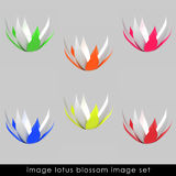 Cropped Six Colorful Waterlilly Blossom Set Royalty Free Stock Photos