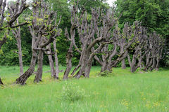 Cropped trees Stock Photos