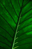Cropped tropical leaf. Leafy stems Stock Photo