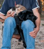 Man holding cute dogs snuggling up and pressing to each other in forest stock images