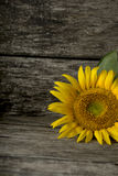 Cropped view of single sunflower bloom Stock Photography
