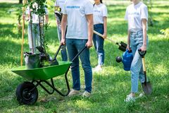 Cropped view of volunteers planting trees in green. Park together stock photography