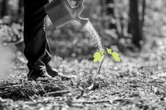 Cropped view of water pouring from can on seedling Stock Photos