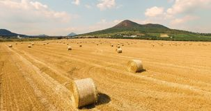 A cropped wheat field with bales of hay in the countryside with a beautiful view of the mountain on a sunny day. Aerial view of cropped wheat field with bales of stock footage