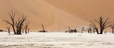 Cropped widok Deadvlei soli niecka kamieniejący drzewa w Sossusvlei przyrody rezerwie w Namibia i Zdjęcia Stock