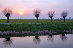 Cropped willows in a dutch landscape. At sunset Stock Photos