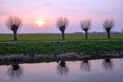 Cropped willows in a typical dutch landscape at sunset Stock Images