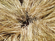 Cropping arranging brown straw heap on rattan basket in black is Royalty Free Stock Images