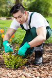 Cropping a plant in a garden Stock Photo