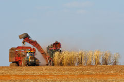 Cropping sugar cane. Two machines cropping sugar cane Royalty Free Stock Photography