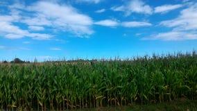 crops immagine stock
