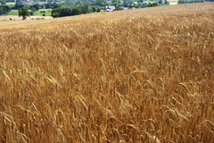 Crops Stock Images