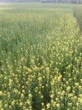 crops fotografie stock libere da diritti