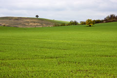 Crops Stock Photo