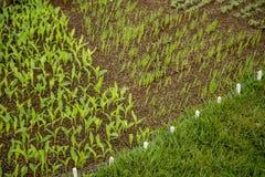 crops fotografie stock