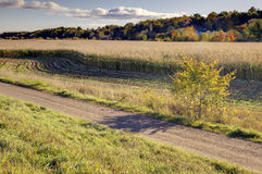 Crops in autumn countryside Stock Photography