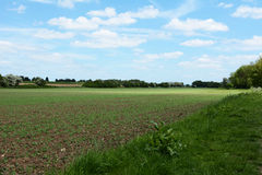 Crops beginning to grow Stock Photography