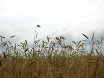 Crops on clouds Stock Photography