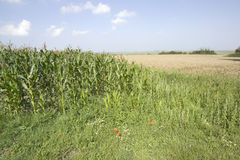 Crops countryside Royalty Free Stock Photos