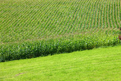 Crops on the farmland Royalty Free Stock Images