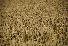 Crops field Stock Photos