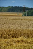Crops field. A crops field in the central part of the Czech Republic. Photo taken close to Beroun, Czech Republic Stock Images