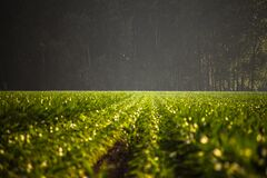 Crops in field Stock Photography