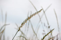 Crops in a field Stock Photo
