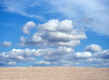 Crops field with blue cloudy sky Stock Photos