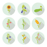 Crops flat icons Royalty Free Stock Photos