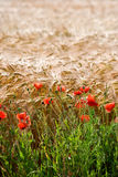 Crops and flowers Royalty Free Stock Photos