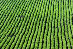 Crops and in the furrow Stock Image