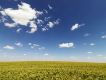 Crops Growing in a Field Royalty Free Stock Images